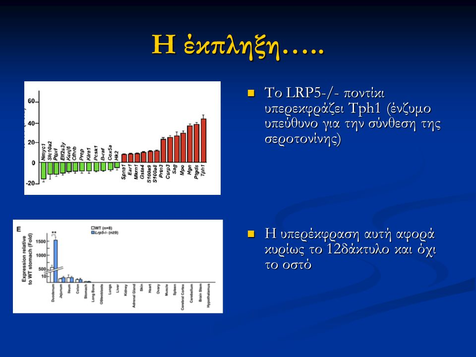 Η έκπληξη….. Το LRP5-/- ποντίκι υπερεκφράζει Tph1 (ένζυμο υπεύθυνο για την σύνθεση της σεροτονίνης)