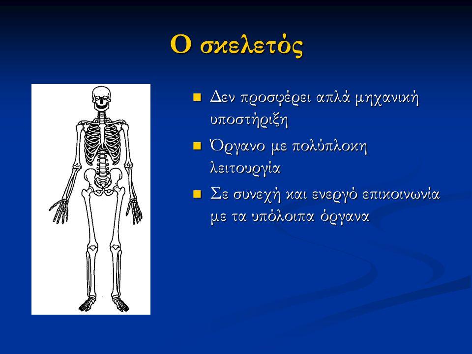 Ο σκελετός Δεν προσφέρει απλά μηχανική υποστήριξη