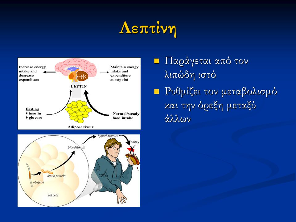 Λεπτίνη Παράγεται από τον λιπώδη ιστό