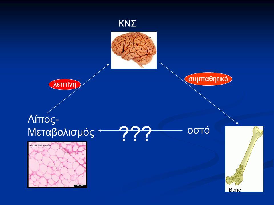 ΚΝΣ συμπαθητικό λεπτίνη Λίπος-Μεταβολισμός οστό 35