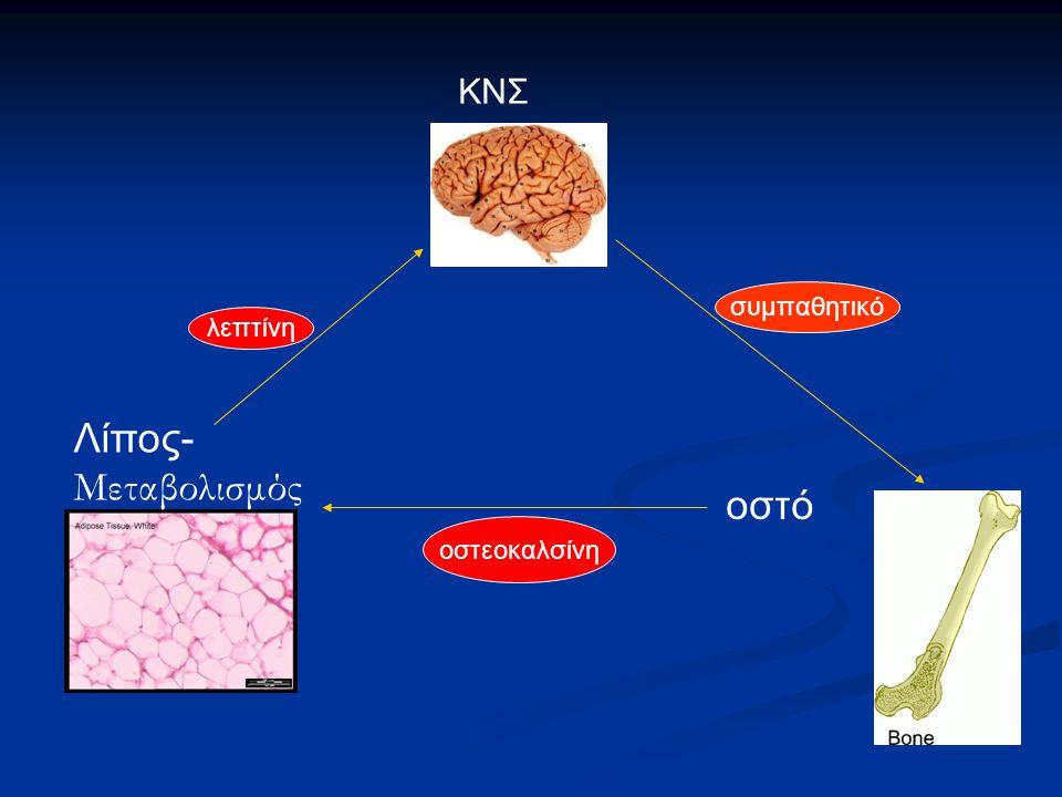ΚΝΣ συμπαθητικό λεπτίνη Λίπος-Μεταβολισμός οστό οστεοκαλσίνη 37