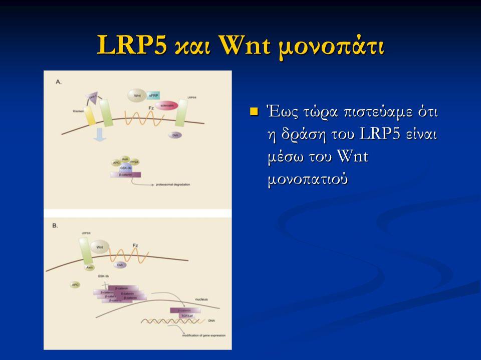 LRP5 και Wnt μονοπάτι Έως τώρα πιστεύαμε ότι η δράση του LRP5 είναι μέσω του Wnt μονοπατιού 8