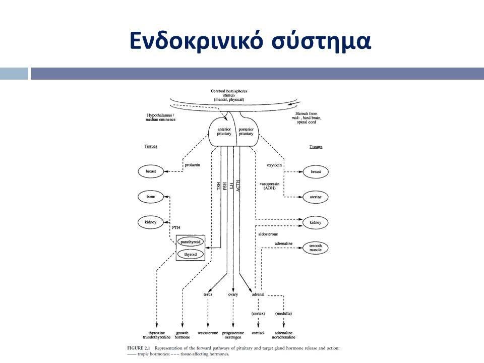 Ενδοκρινικό σύστημα