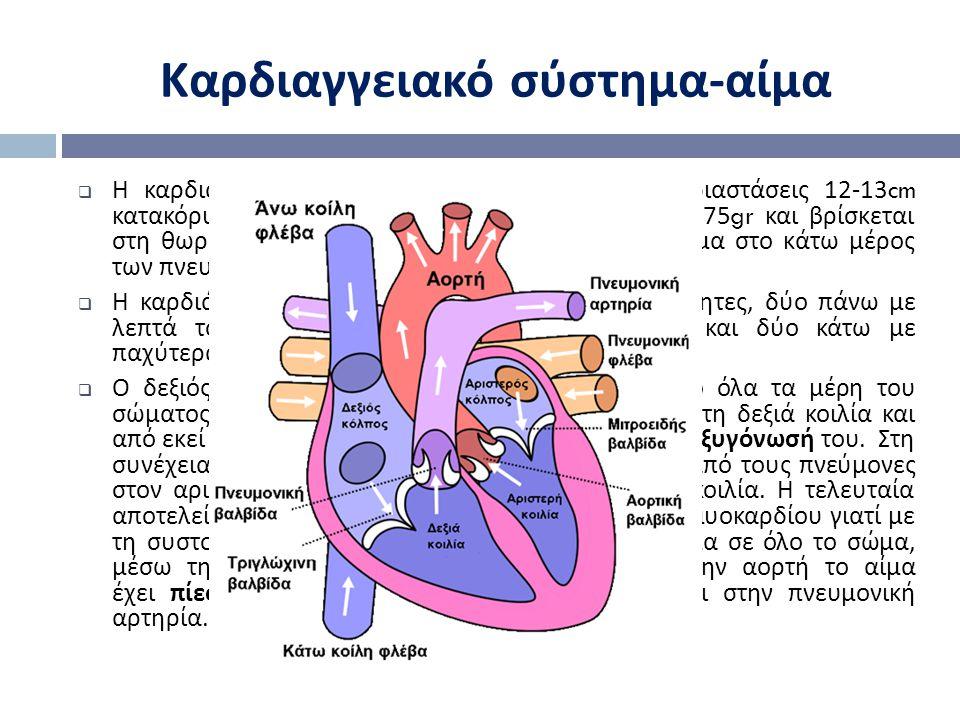 Καρδιαγγειακό σύστημα-αίμα