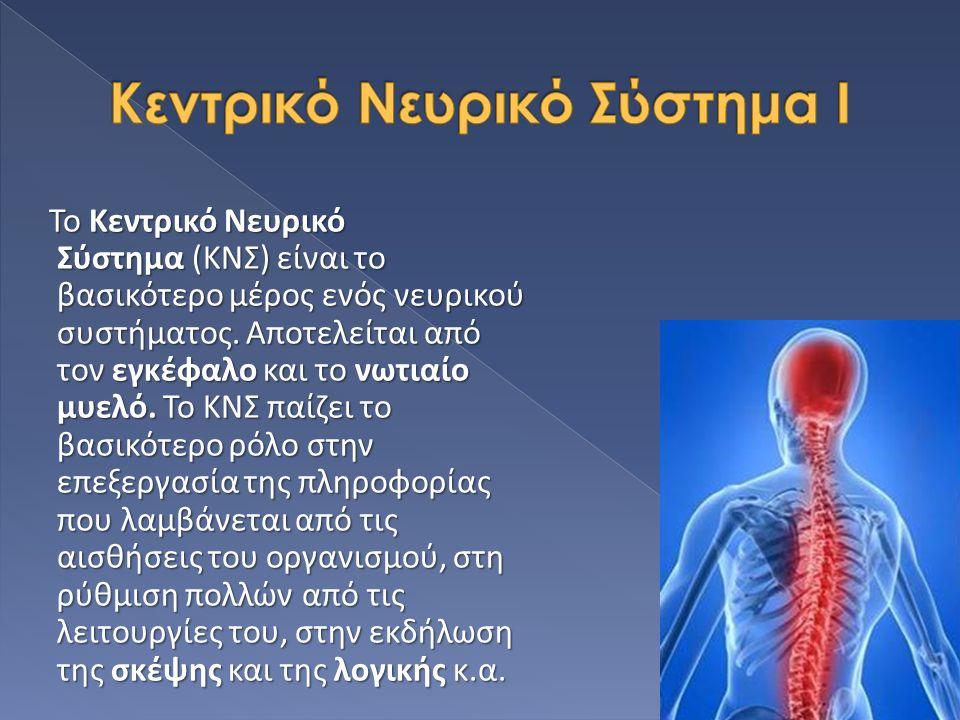 Κεντρικό Νευρικό Σύστημα Ι
