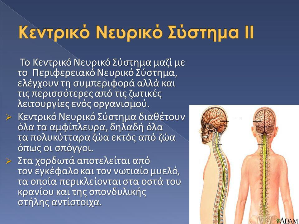 Κεντρικό Νευρικό Σύστημα ΙΙ