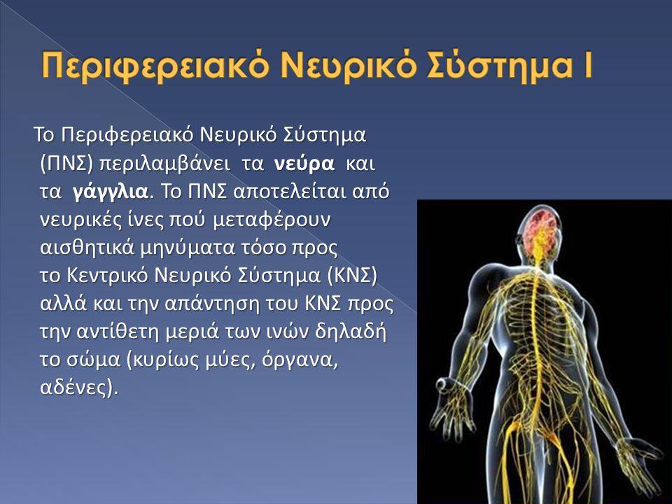 Περιφερειακό Νευρικό Σύστημα Ι