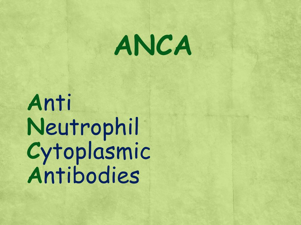ANCA Anti Neutrophil Cytoplasmic Antibodies