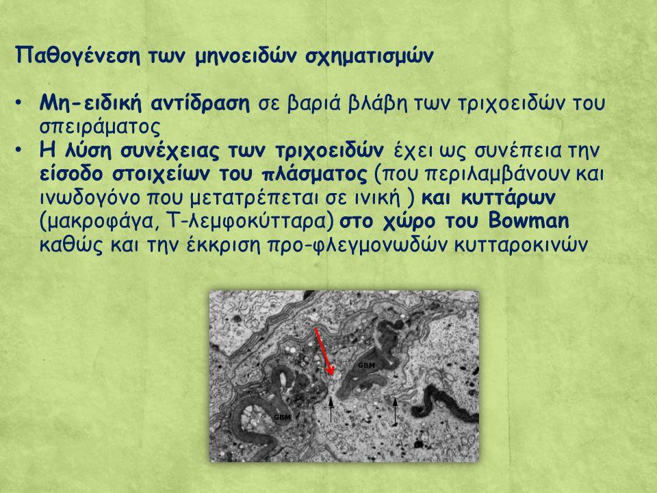 Παθογένεση των μηνοειδών σχηματισμών