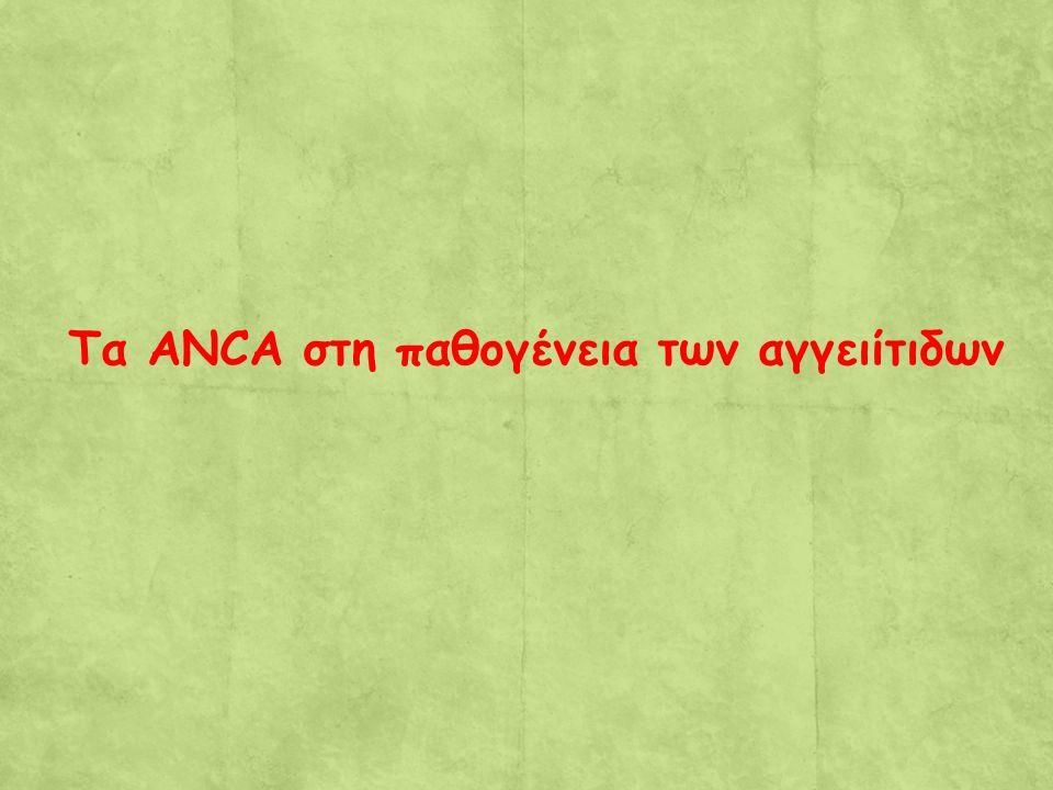 Τα ANCA στη παθογένεια των αγγειίτιδων