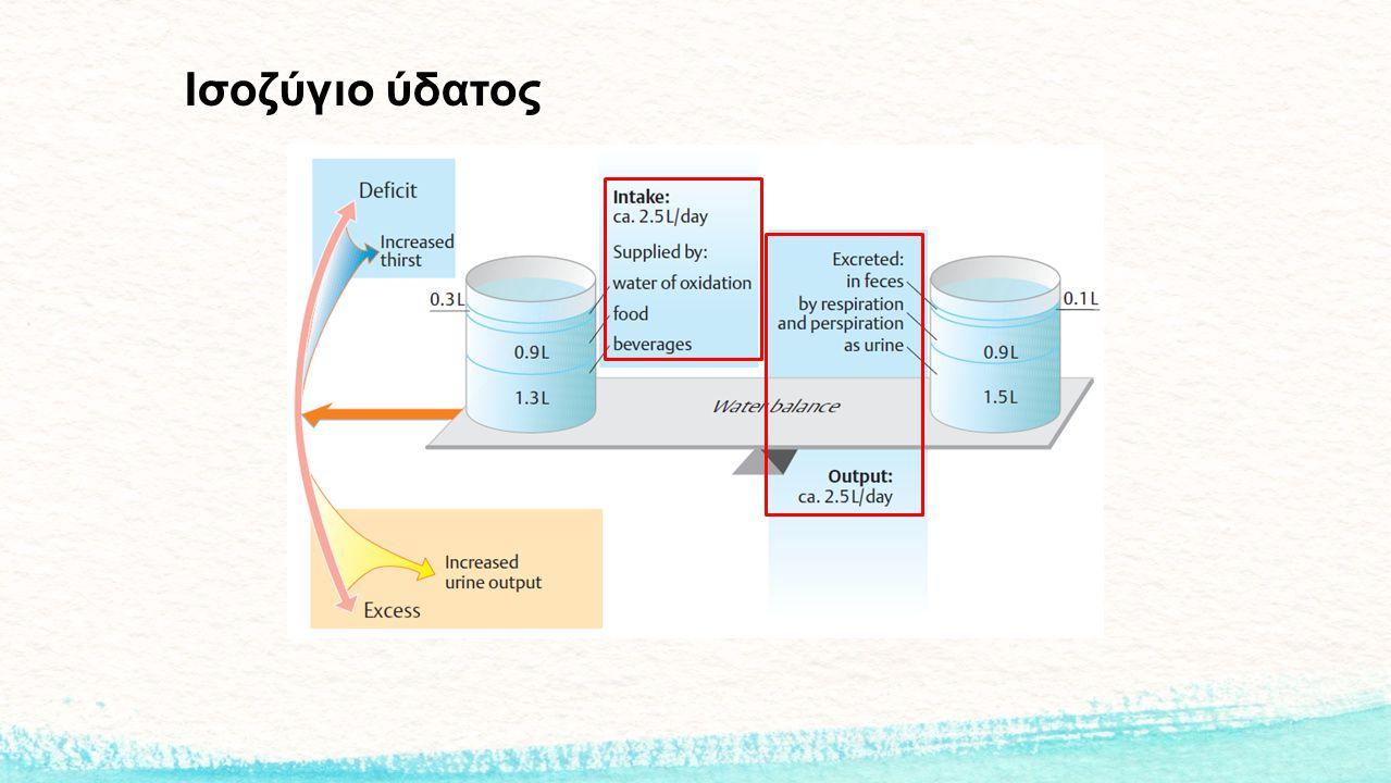Ισοζύγιο ύδατος
