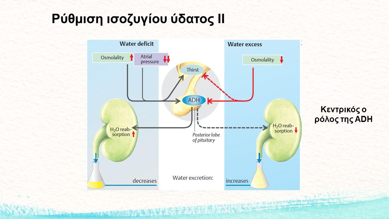 Ρύθμιση ισοζυγίου ύδατος ΙΙ