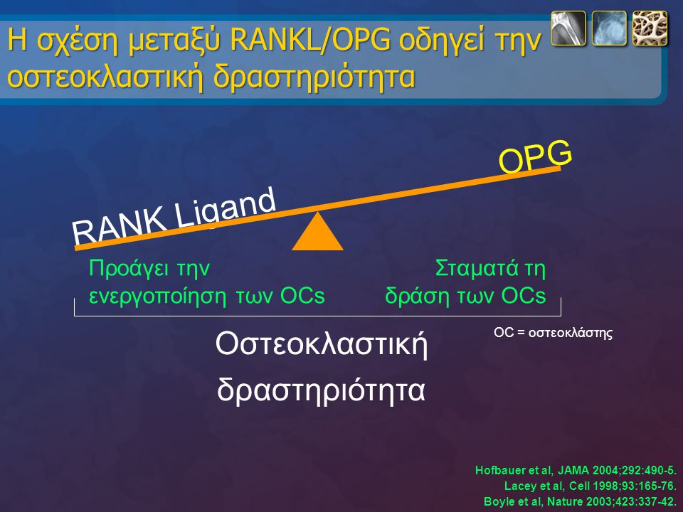 Η σχέση μεταξύ RANKL/OPG οδηγεί την οστεοκλαστική δραστηριότητα