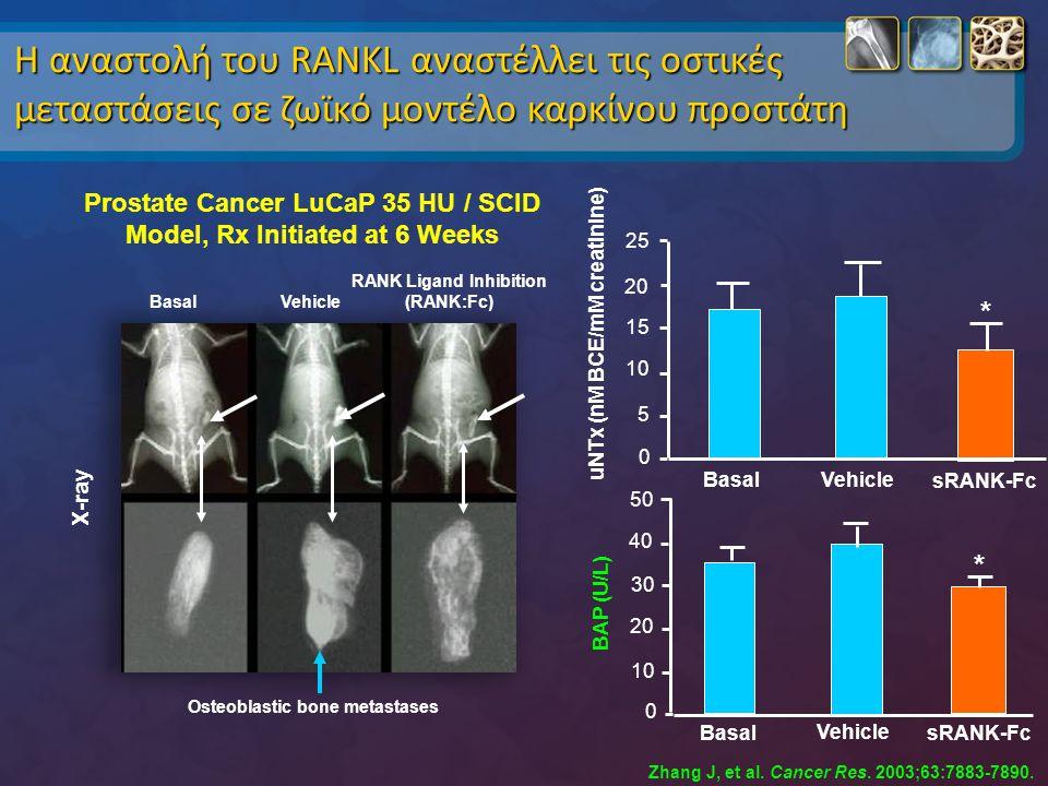 Η αναστολή του RANKL αναστέλλει τις οστικές μεταστάσεις σε ζωϊκό μοντέλο καρκίνου προστάτη