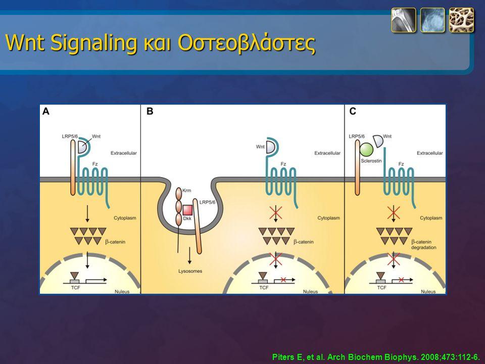 Wnt Signaling και Οστεοβλάστες
