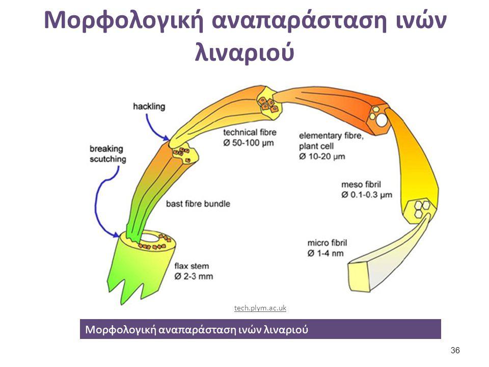 Όψη ίνας λιναριού (1) και βαμβακιού(2).