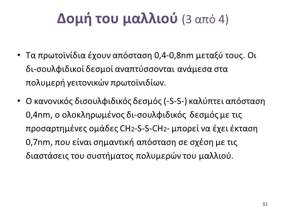 Δομή του μαλλιού (4 από 4)