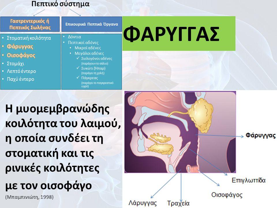 ΦΑΡΥΓΓΑΣ Η μυομεμβρανώδης κοιλότητα του λαιμού, η οποία συνδέει τη στοματική και τις ρινικές κοιλότητες.
