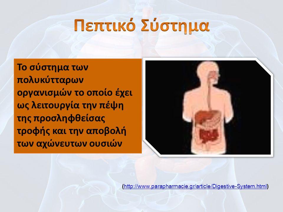 Πεπτικό Σύστημα