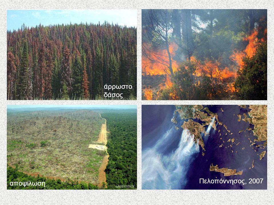 άρρωστο δάσος αποψίλωση Πελοπόννησος, 2007