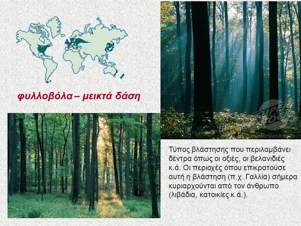 φυλλοβόλα – μεικτά δάση