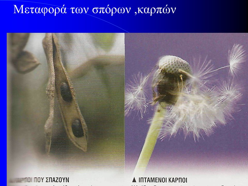 Μεταφορά των σπόρων ,καρπών