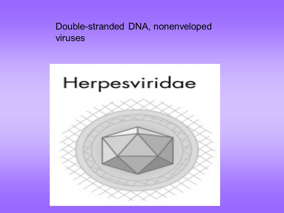 Double-stranded DNA, nonenveloped viruses