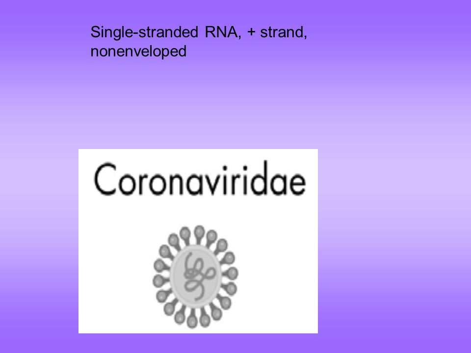 Single-stranded RNA, + strand, nonenveloped