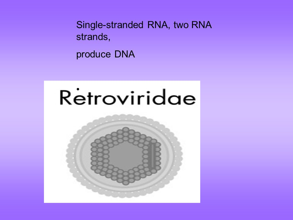 Single-stranded RNA, two RNA strands,