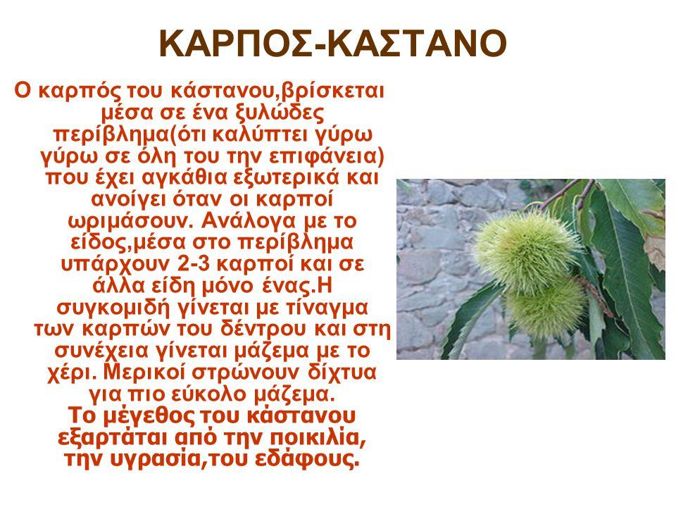 ΚΑΡΠΟΣ-ΚΑΣΤΑΝΟ