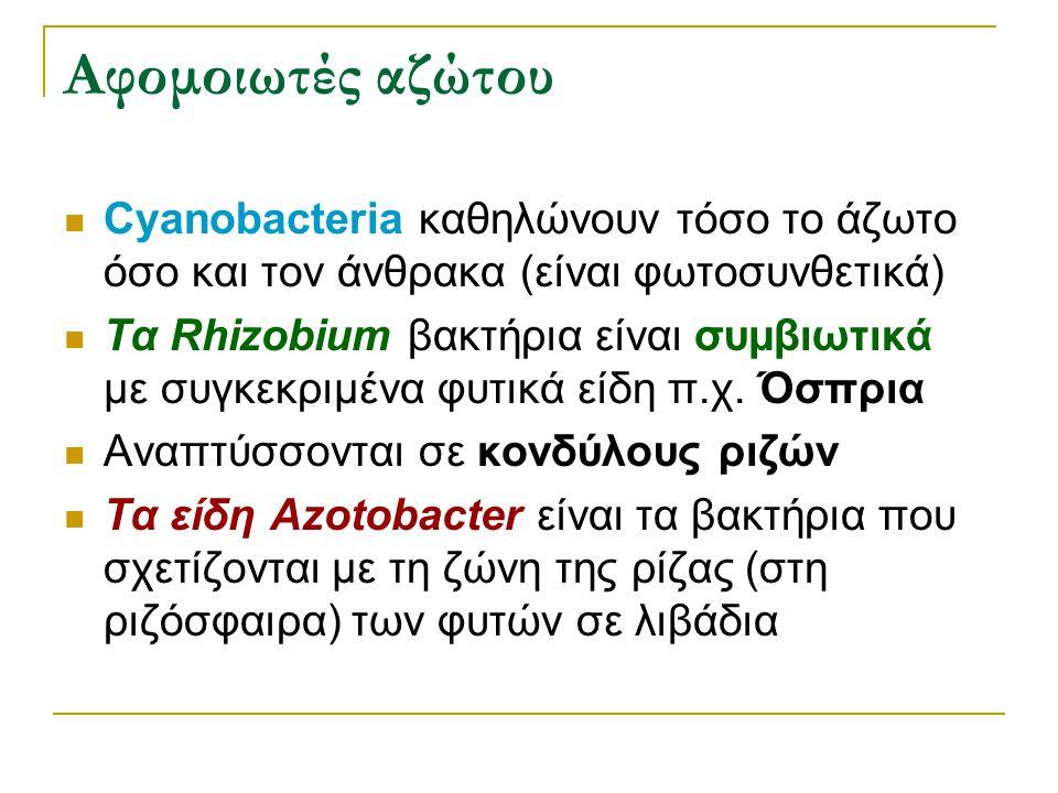 Αφομοιωτές αζώτου Cyanobacteria καθηλώνουν τόσο το άζωτο όσο και τον άνθρακα (είναι φωτοσυνθετικά)