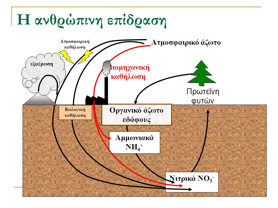 Ατμοσφαιρική καθήλωση Οργανικό άζωτο εδάφους