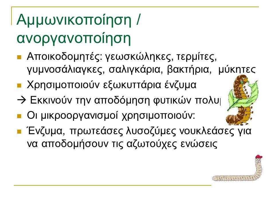 Αμμωνικοποίηση / ανοργανοποίηση