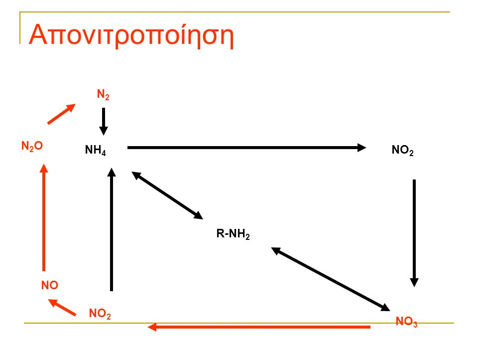 Απονιτροποίηση N2 N2O NH4 NO2 R-NH2 NO NO2 NO3