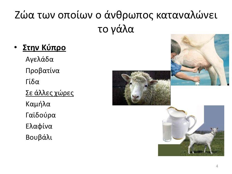 Ζώα των οποίων ο άνθρωπος καταναλώνει το γάλα
