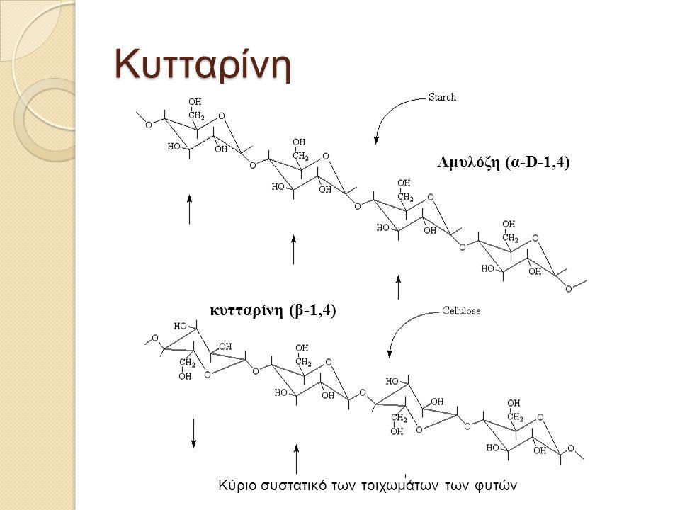 Κυτταρίνη Αμυλόζη (α-D-1,4) κυτταρίνη (β-1,4)