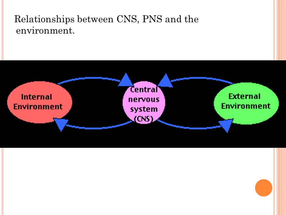 Relationships between CNS, PNS and the environment.