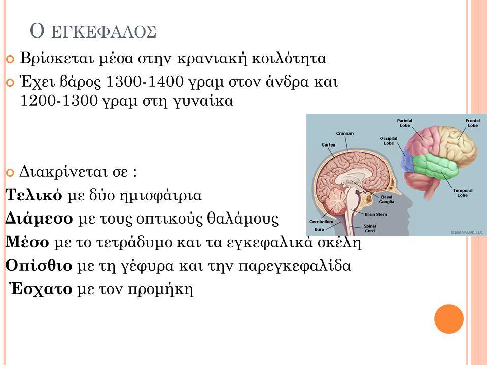 Ο εγκεφαλος Βρίσκεται μέσα στην κρανιακή κοιλότητα