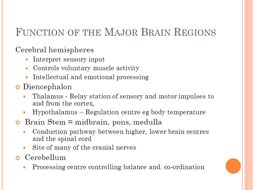 Function of the Major Brain Regions