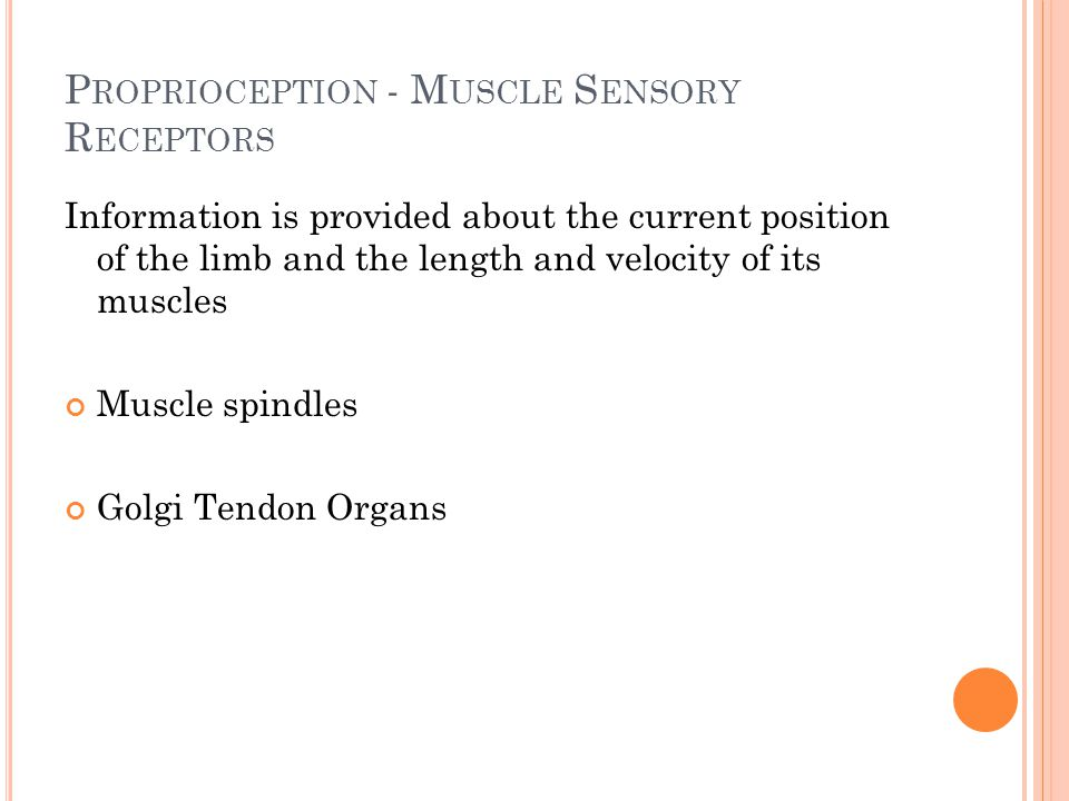 Proprioception - Muscle Sensory Receptors
