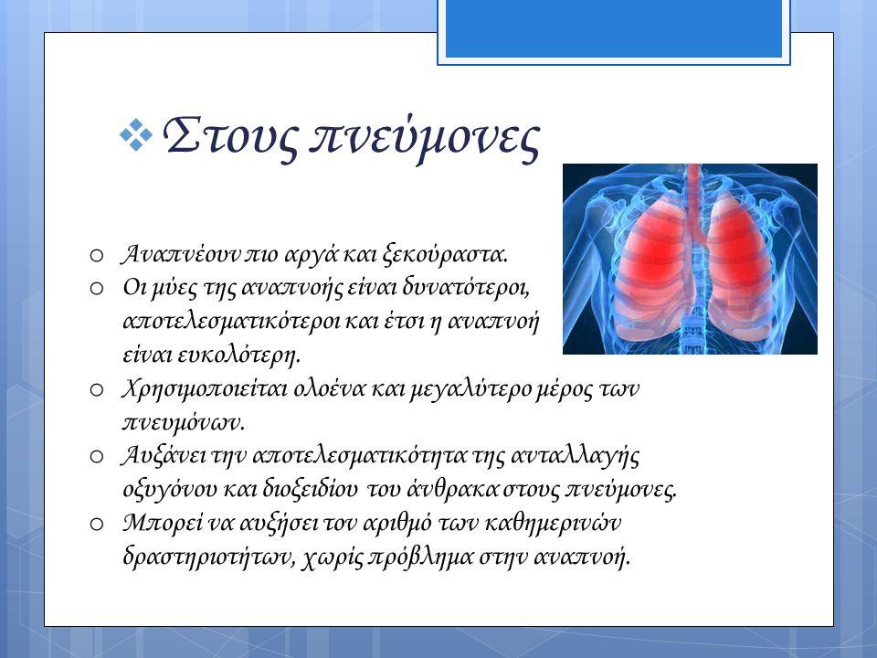 Στους πνεύμονες Αναπνέουν πιο αργά και ξεκούραστα.