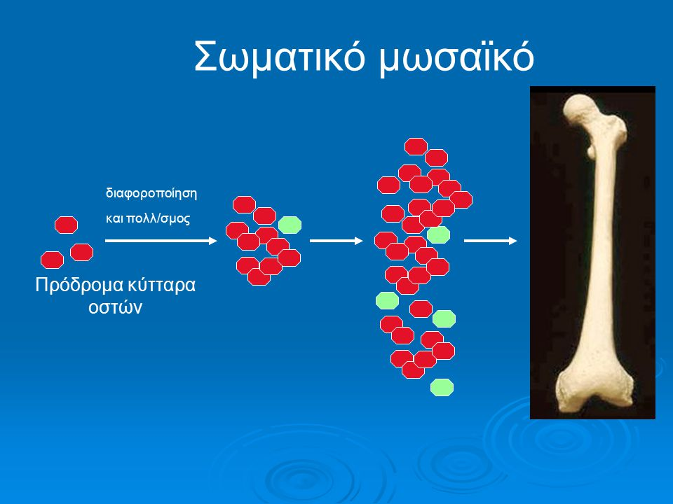 Πρόδρομα κύτταρα οστών
