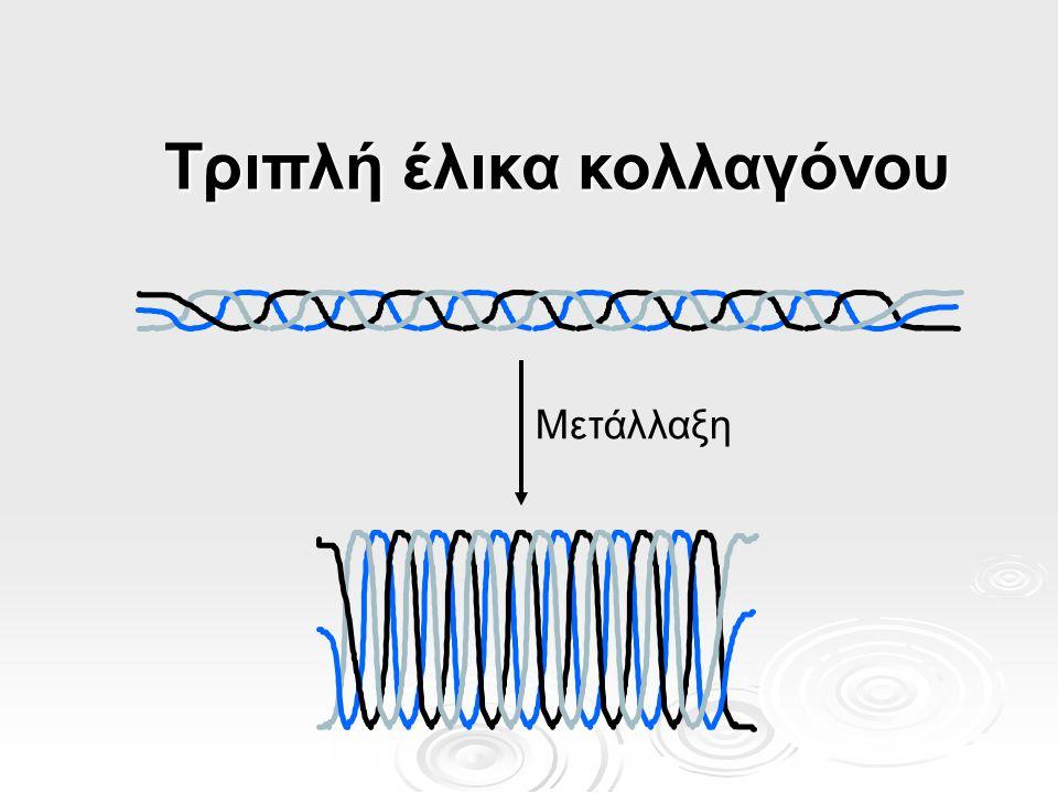 Τριπλή έλικα κολλαγόνου
