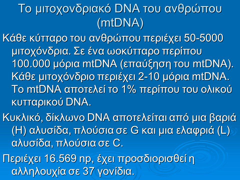 Το μιτοχονδριακό DNA του ανθρώπου (mtDNA)