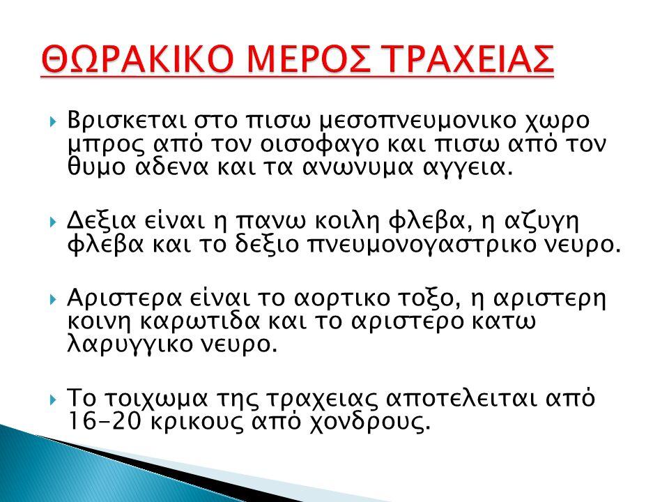 ΘΩΡΑΚΙΚΟ ΜΕΡΟΣ ΤΡΑΧΕΙΑΣ