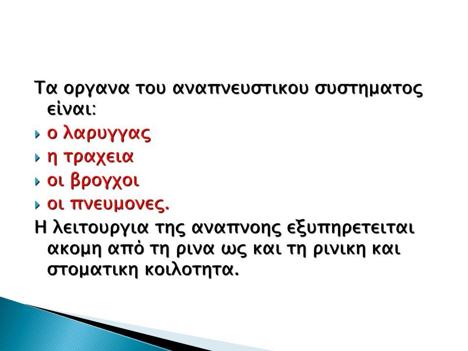 Τα οργανα του αναπνευστικου συστηματος είναι: