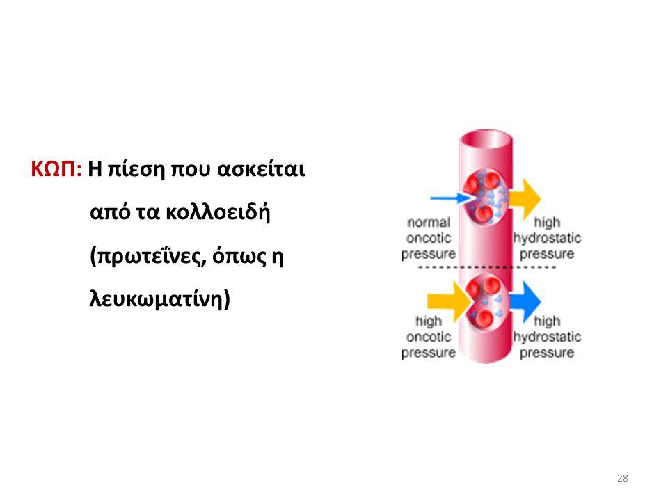ΚΩΠ: Η πίεση που ασκείται από τα κολλοειδή (πρωτεΐνες, όπως η λευκωματίνη)