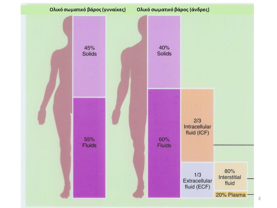 Ολικό σωματικό βάρος (γυναίκες)