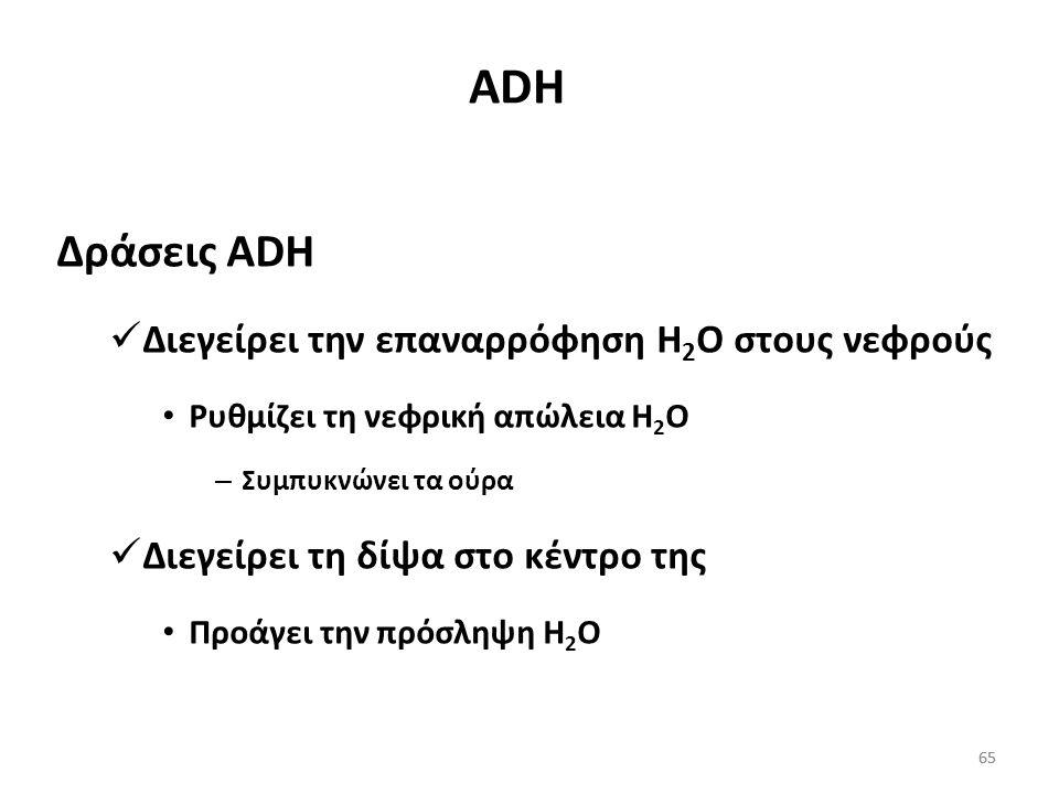 ADH Δράσεις ADH Διεγείρει την επαναρρόφηση Η2Ο στους νεφρούς