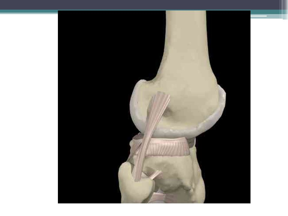 Lateral Collateral Ligament (Syn